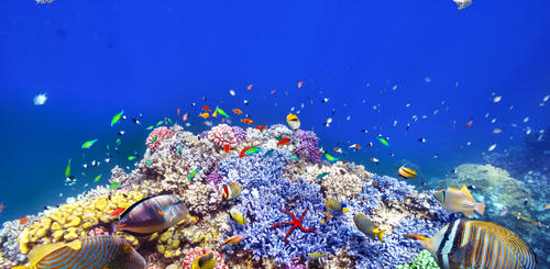 Buntes Great Barrier Reef