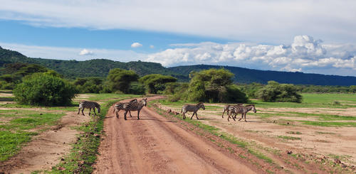Straße im Lake Manyara Nationalpark