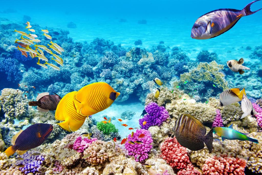 Die Whitsunday Islands im Great Barrier Reef von Australien