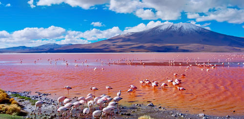 Flamingos im Laguna Colorada