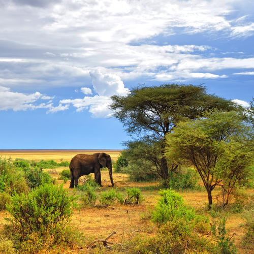 Landschaft im Lake Manyara Nationalpark