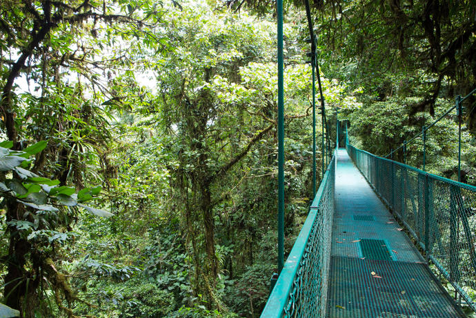 Monteverde Nationalpark