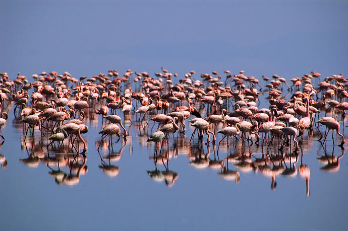 Flamingos im Lake Natron