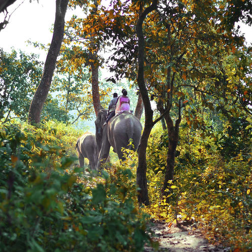 Elefantentour durch den Chitwan Nationalpark