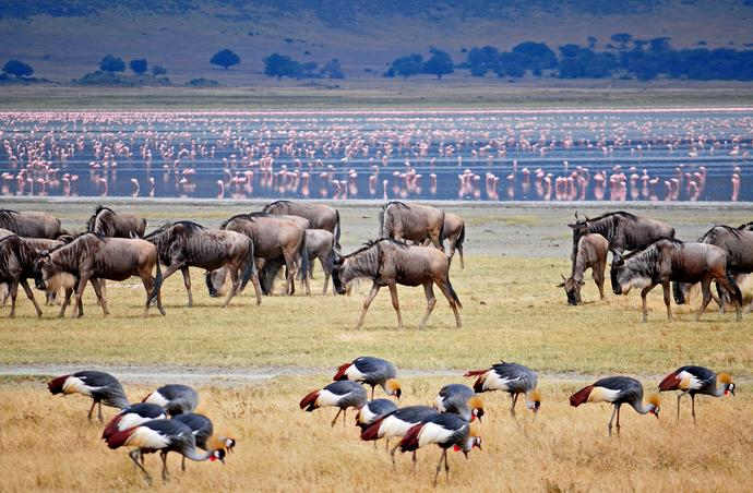 Tierherden am Lake Manyara