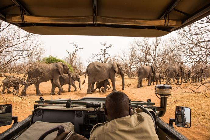 Safari Chobe Nationalpark