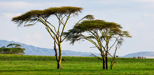 Landschaft am Lake Naivasha